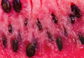 Watermelon Seeds Benefits : 18 Best List For Health, Hair & Skin